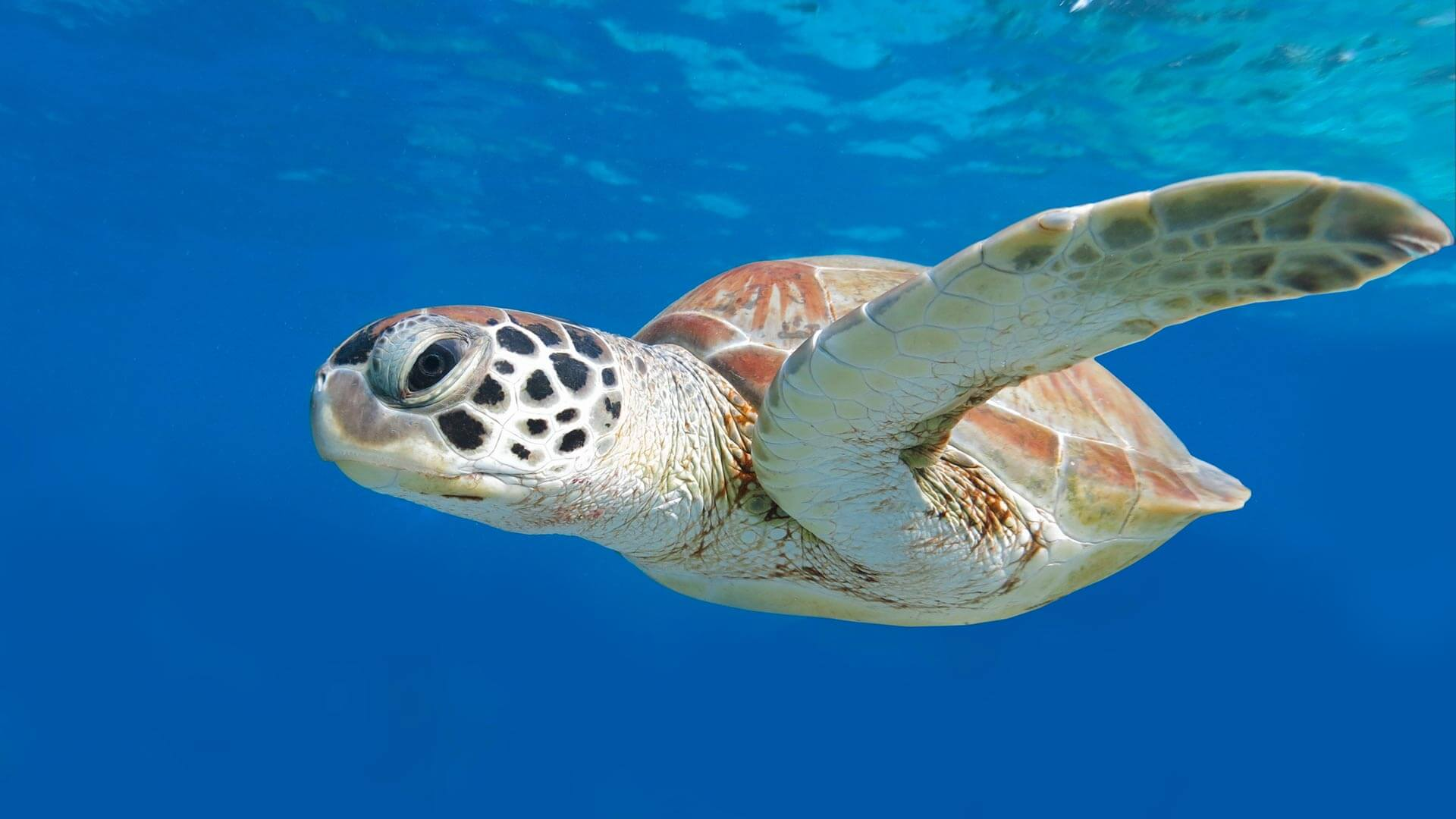 Are Turtle's the Coolest Underwater Creatures?
