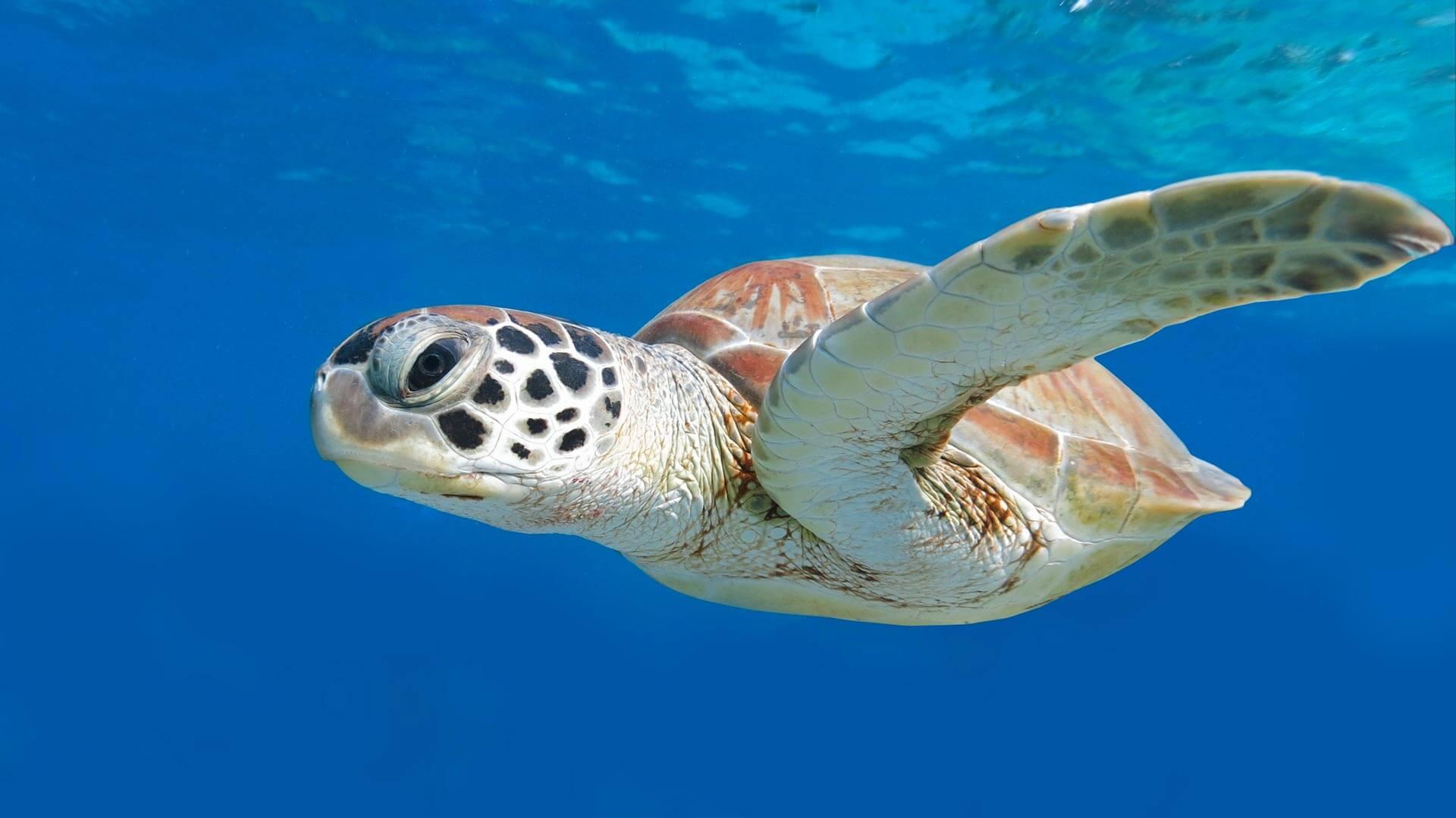 Are Turtle's the Coolest Underwater Creatures? · Aussie ...