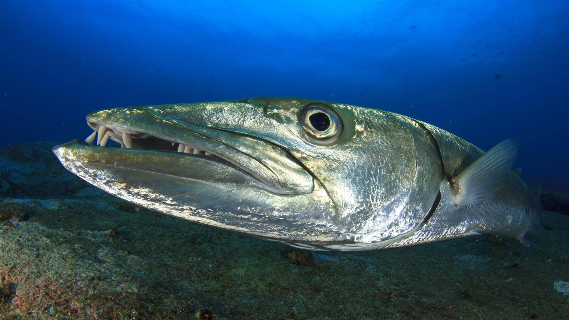 Shark Fin Reef