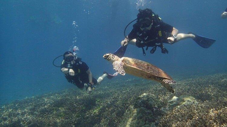 Racha Noi Bay Turtle Scuba Divers Day Trip Padi Phuket