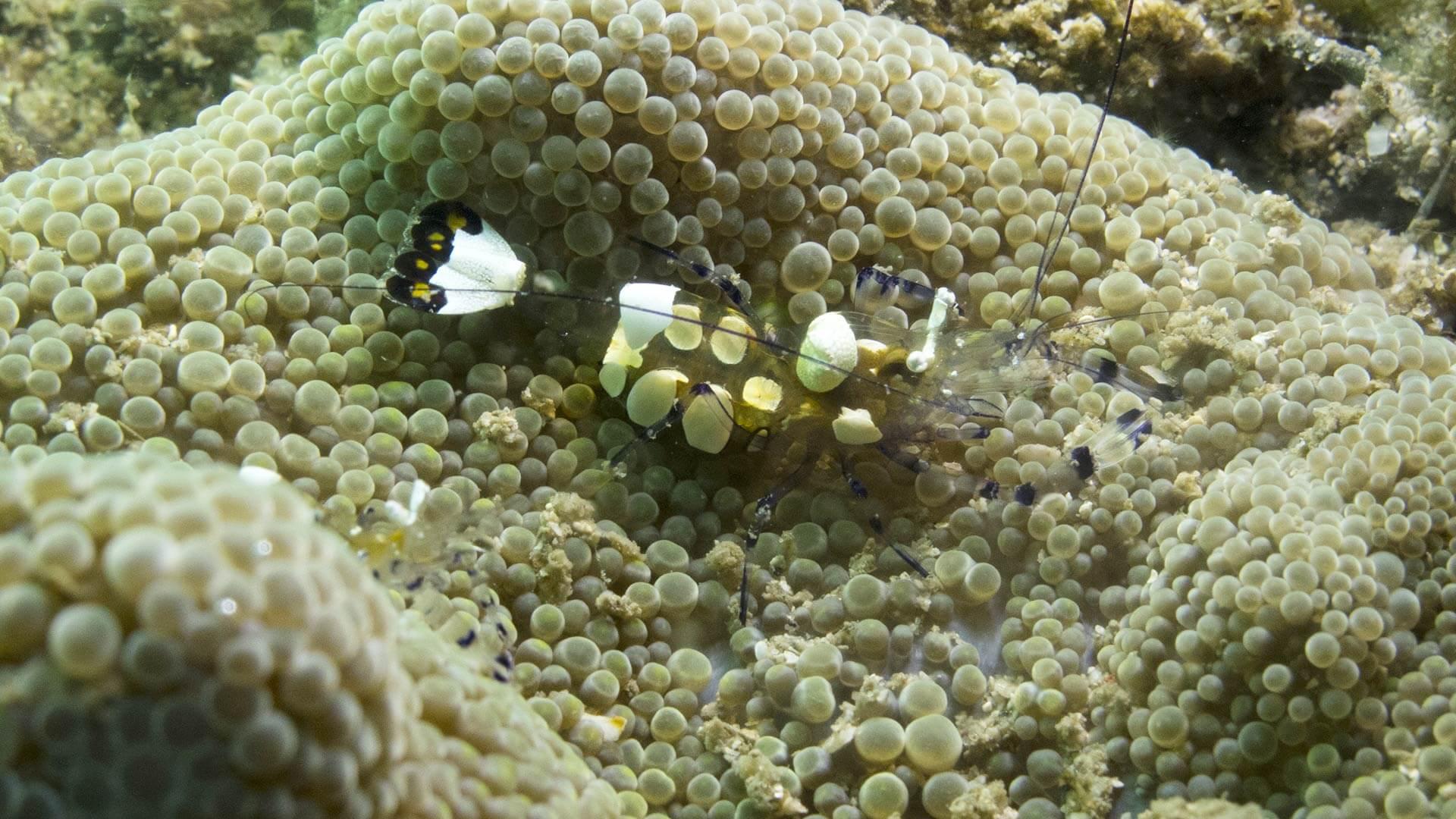 Beacon Reef – Island 8