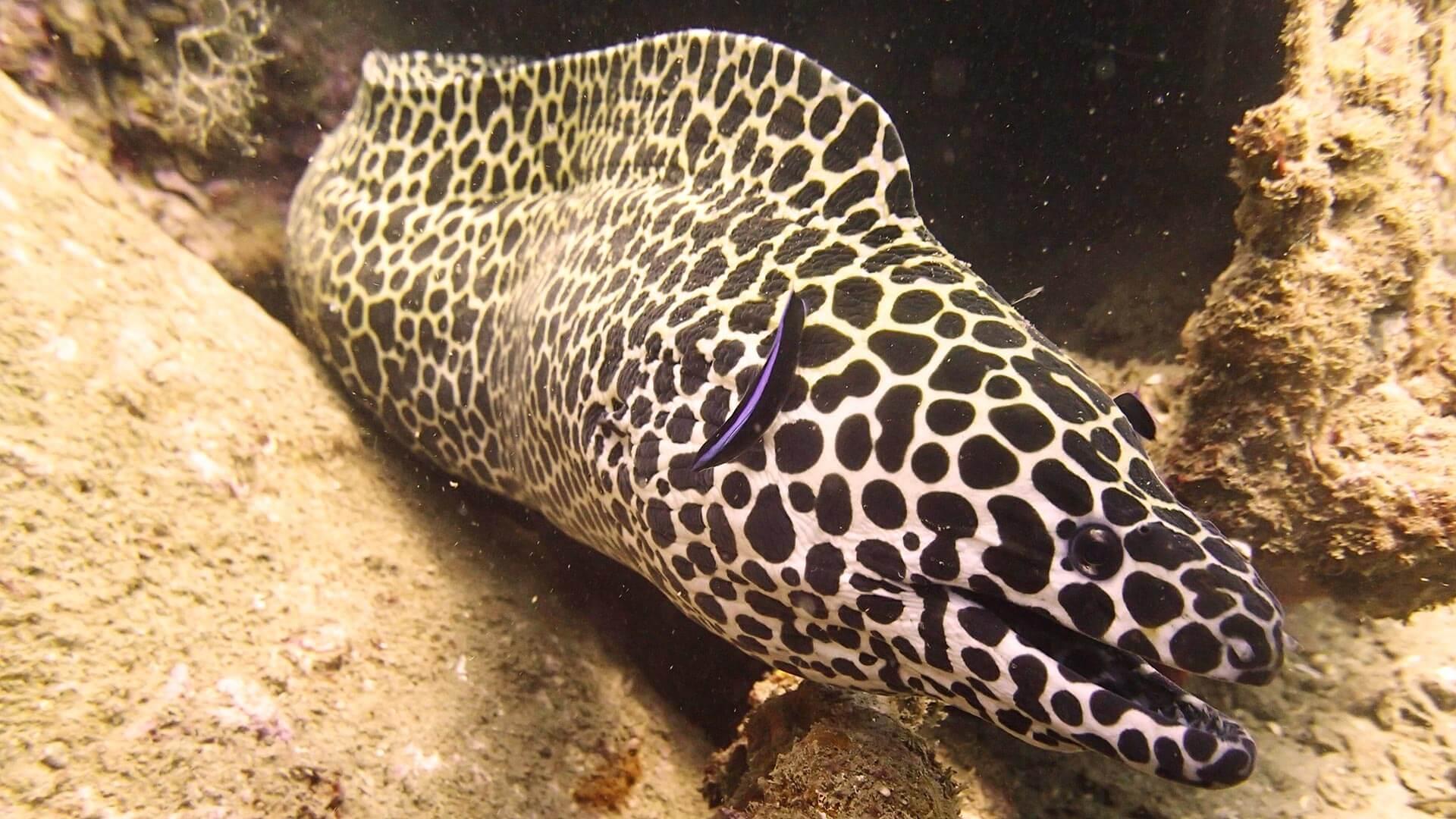 Amazing Eels