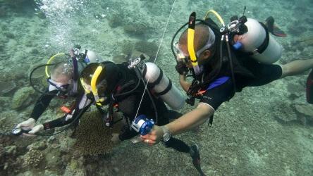 Padi Specialty Course Aussie Diver Phuket Scuba Diving