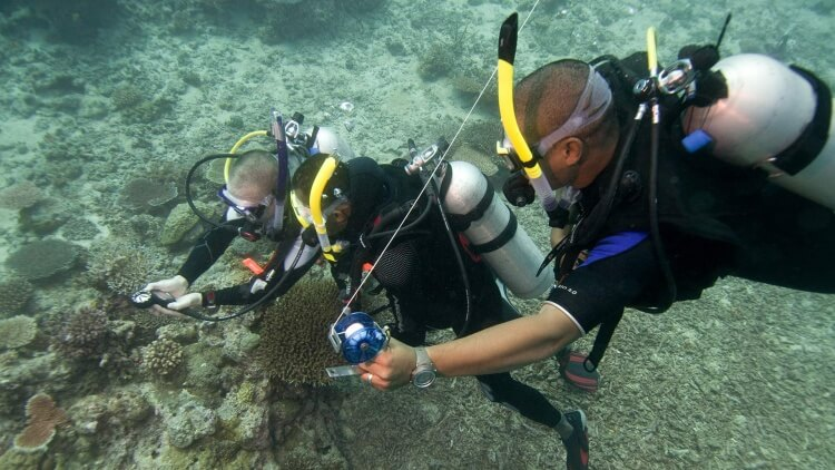 Padi Specialty Course Aussie Divers Phuket Best