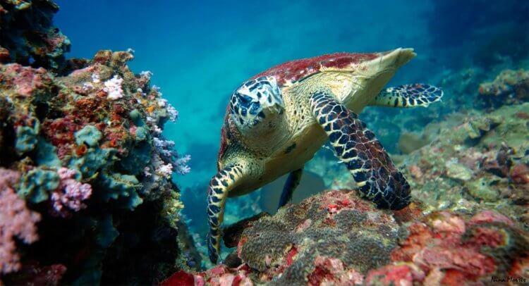 Turtle Aussie Divers Phuket Scuba Diving