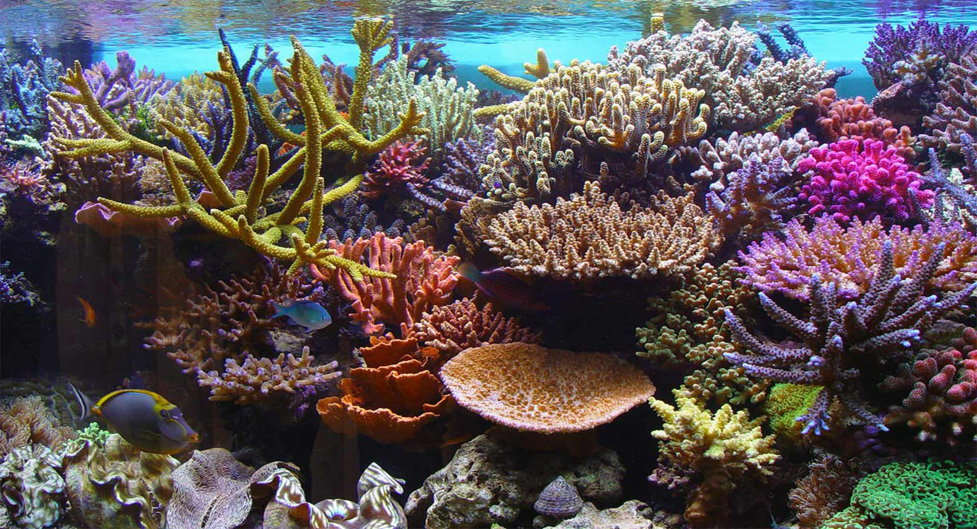 Is Chemical Sunscreen Damaging Coral Reef In Phuket
