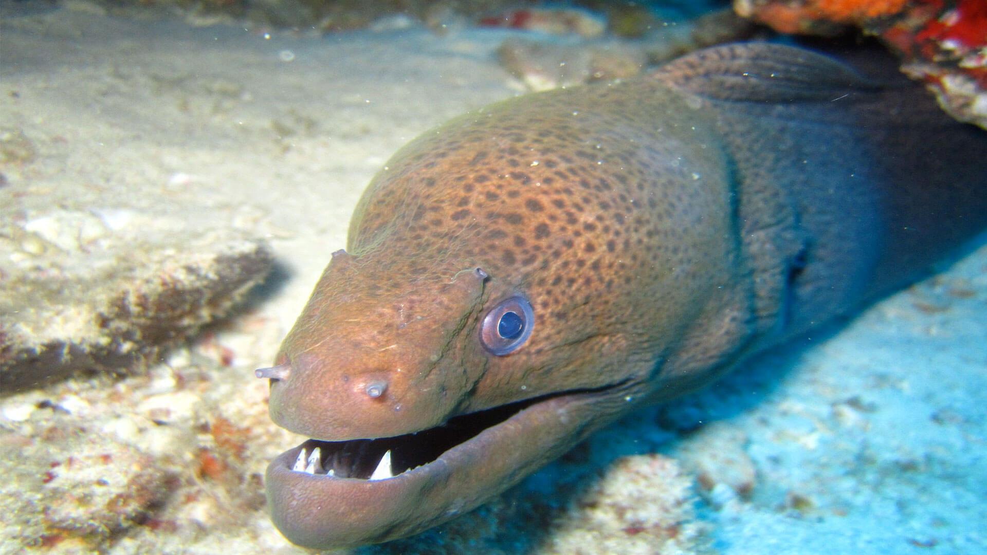Interesting Eel Facts