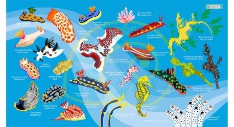 Oceanarium Nudibranch Towel Aussie Divers Phuket