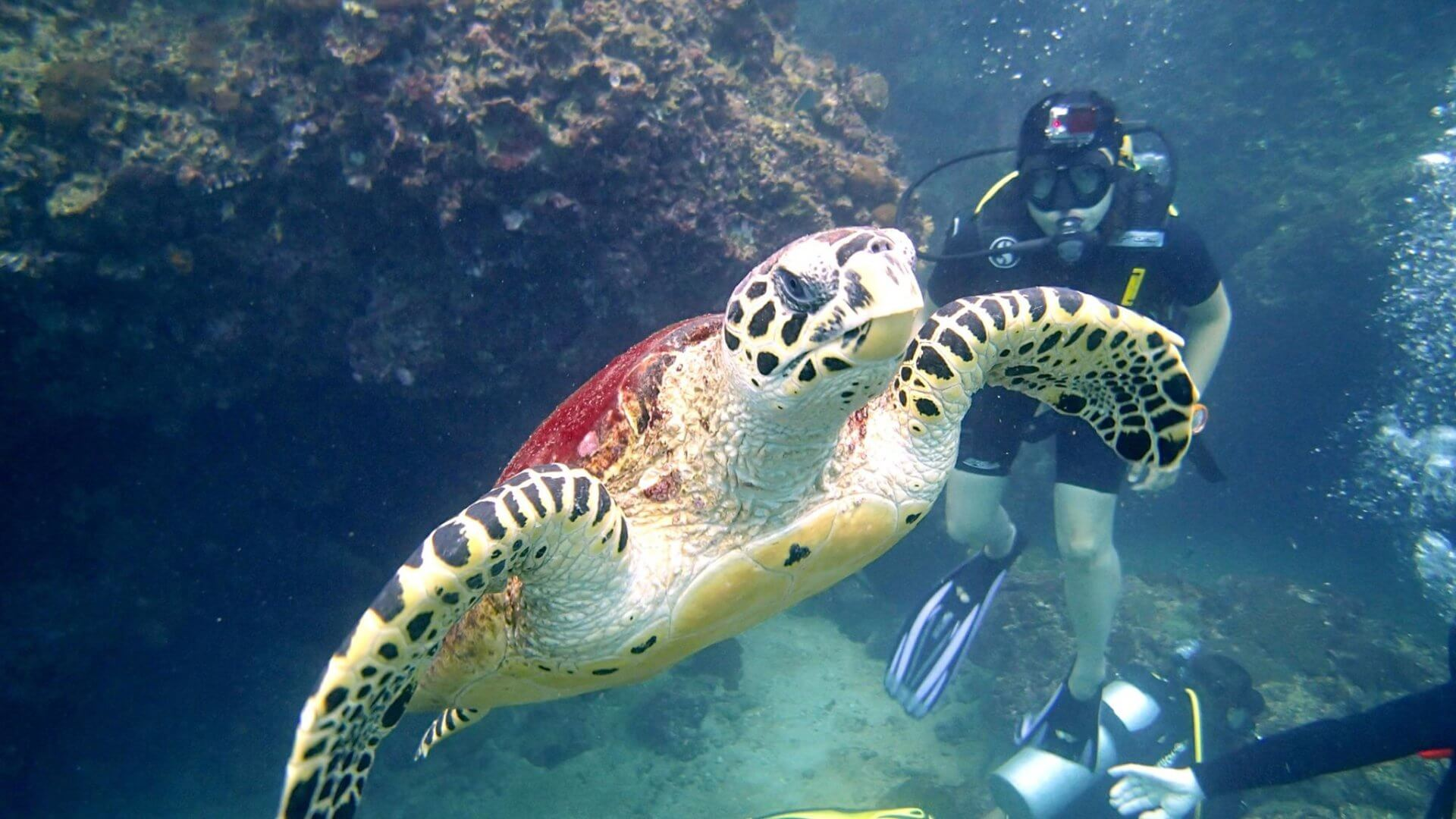 The Reasons Why We Love Diving in Phuket, Thailand