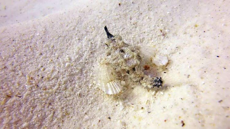 Seamoth Scuba Diving Phuket Thailand