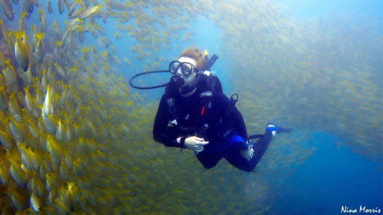 Phi Phi Fish Scuba Dive Aussie Divers Phuket Nina