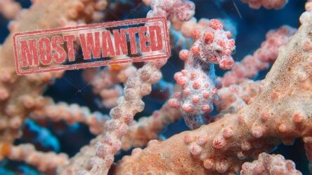 Aussie Divers Phuket Most Wanted