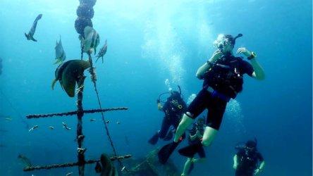 Aussie Divers Open Water Bat Fish