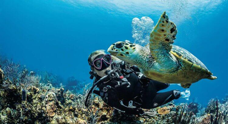 Scubapro Turtle Aussie Divers Phuket