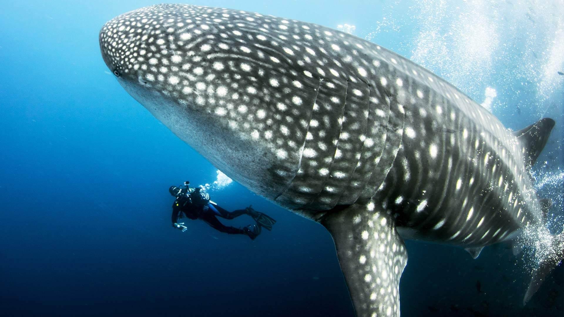Certified Divers Trips Koh Tao