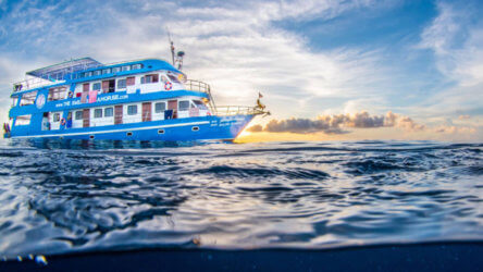 The Smiling Seahorse Liveaboard